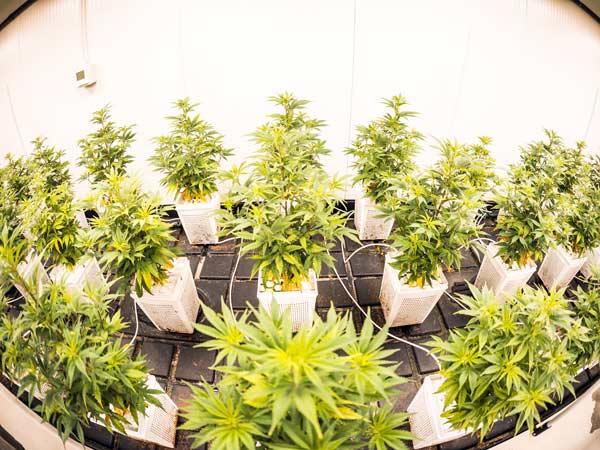 Controllo-ph-migliore-per-irrigazione-cannabis