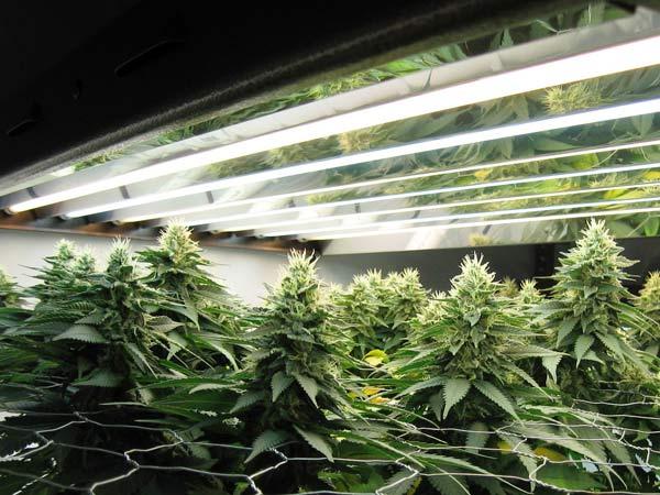 Impianti-di-coltivazione-indoor