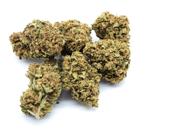 produzione-cannabis-societa-agricola-genesi-srl-modena